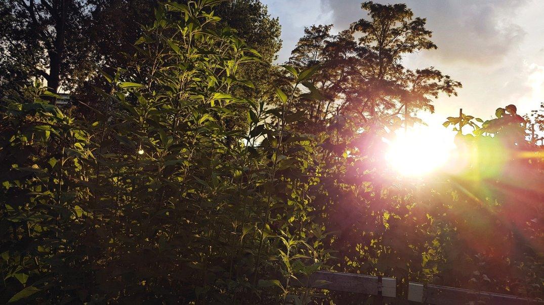 Late sun