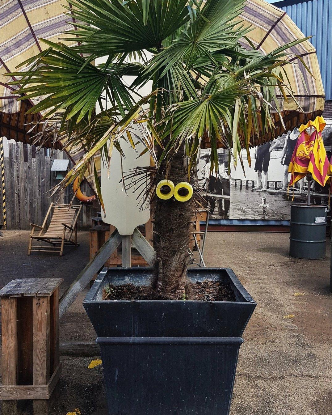 Foomp palmboom