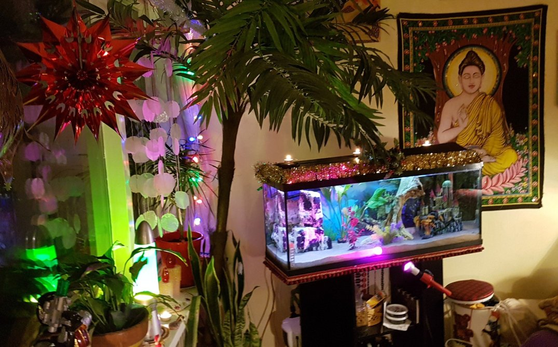Christmas aquarium