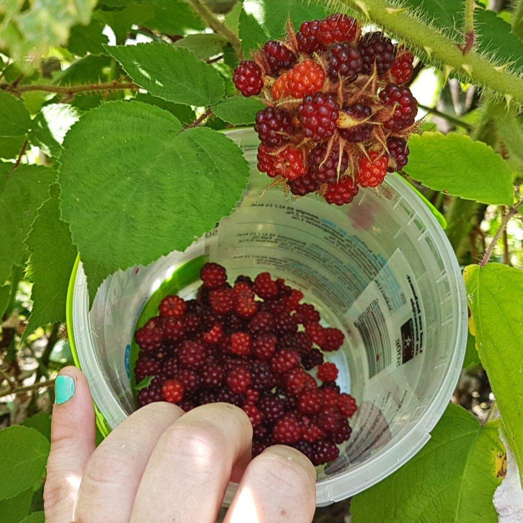Japanese wineberry